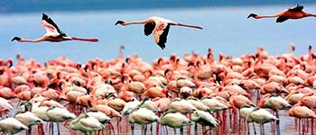 Lake Manyara Tanzania Safari