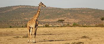 Tanzania tours to Serengeti