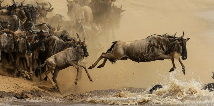 wildebeest migration tours