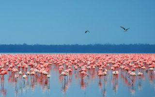 1 Day Lake Nakuru Tour