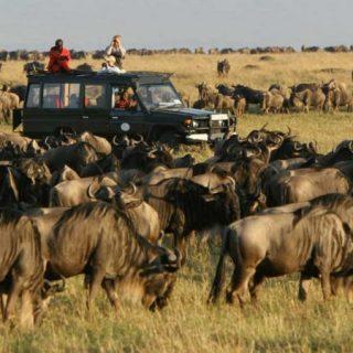 10 Days Masai Mara and Serengeti safari