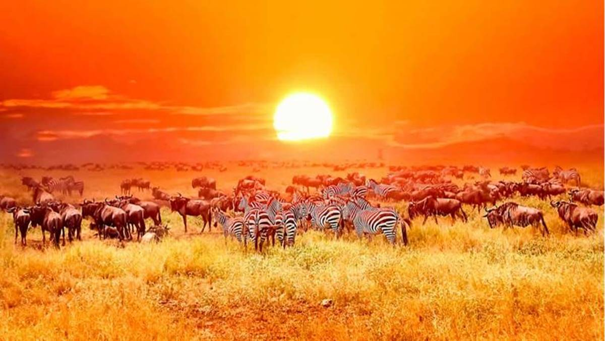 10 Days Volcanoes, Masai Mara and Serengeti safari