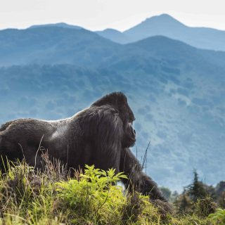 10 Days Volcanoes, Masai Mara and Serengeti safari