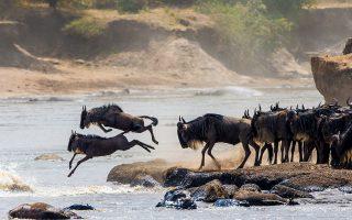 18 Days Best of Tanzania and Kenya safaris
