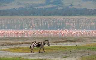 2 Days Lake Manyara and Ngorogoro Crater Safari