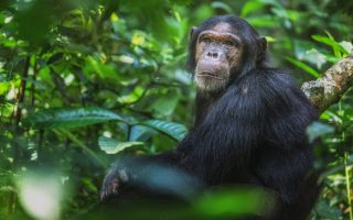 5 Days Nyungwe national park safari