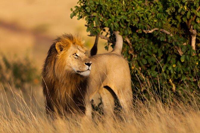 10 days Kenya and Tanzania wildlife and Zanzibar safari