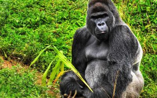 3 Day Rwanda Gorilla Expedition