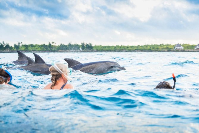 Dolphin Tour Experience