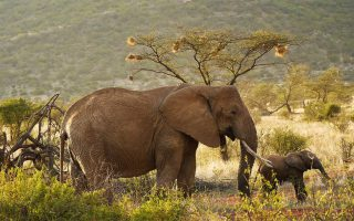 5 days Masai Mara, Samburu and Lake Nakuru