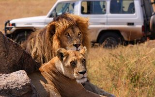 6 Days Serengeti & Ngorongoro Wildlife Safari