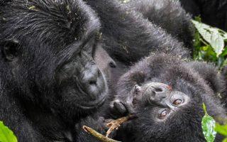 7 Days Rwanda and Congo safari