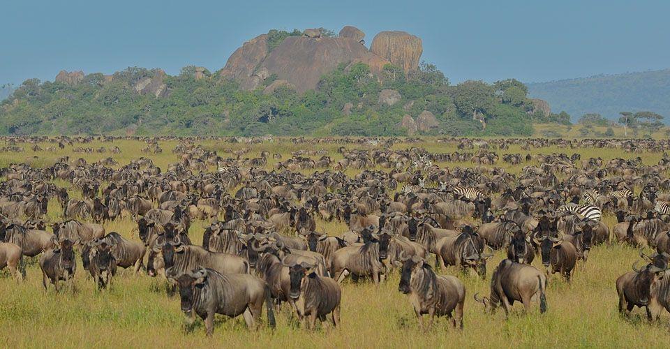 7 Days Tanzania Wildebeest Migration Safari (Serengeti National Park)
