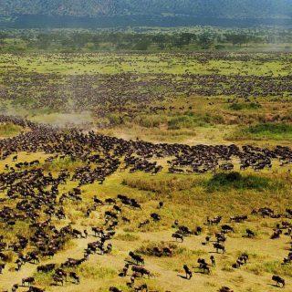 7 Days Tanzania Wildebeest Migration tour