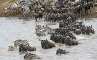 9 Days Best of Tanzania Wildlife Safari