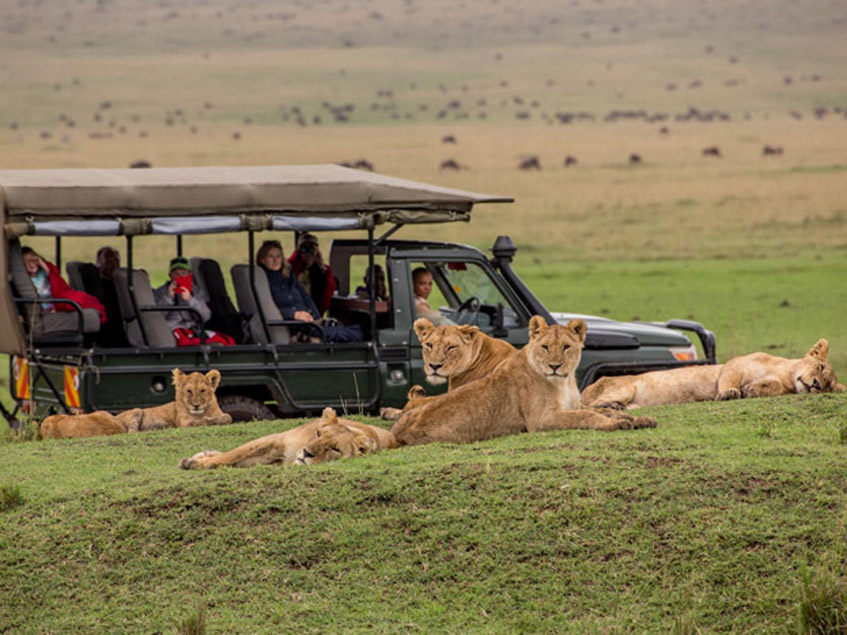 Masai Mara national reserve.