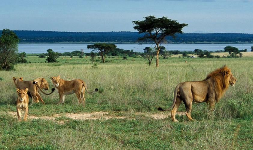 Image result for bugungu wildlife reserve