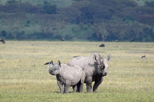 12 days Tanzania and Zanzibar safari