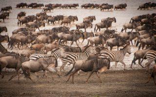 Discover Tanzania