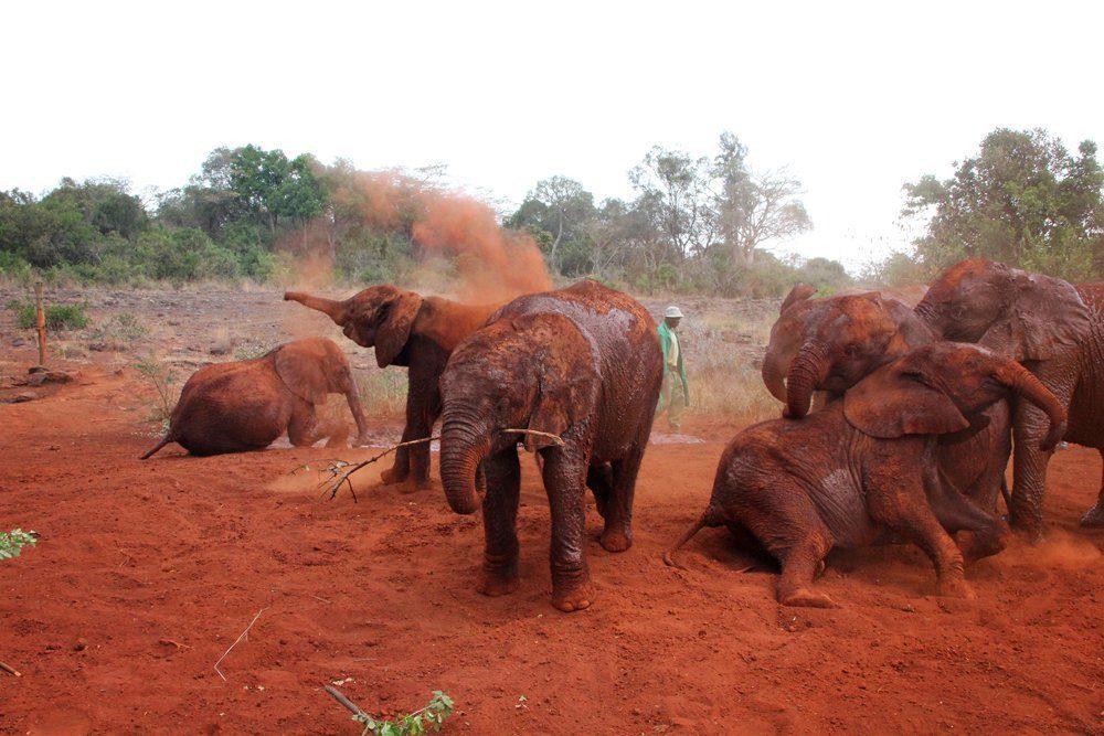 Elephant orphanage center.