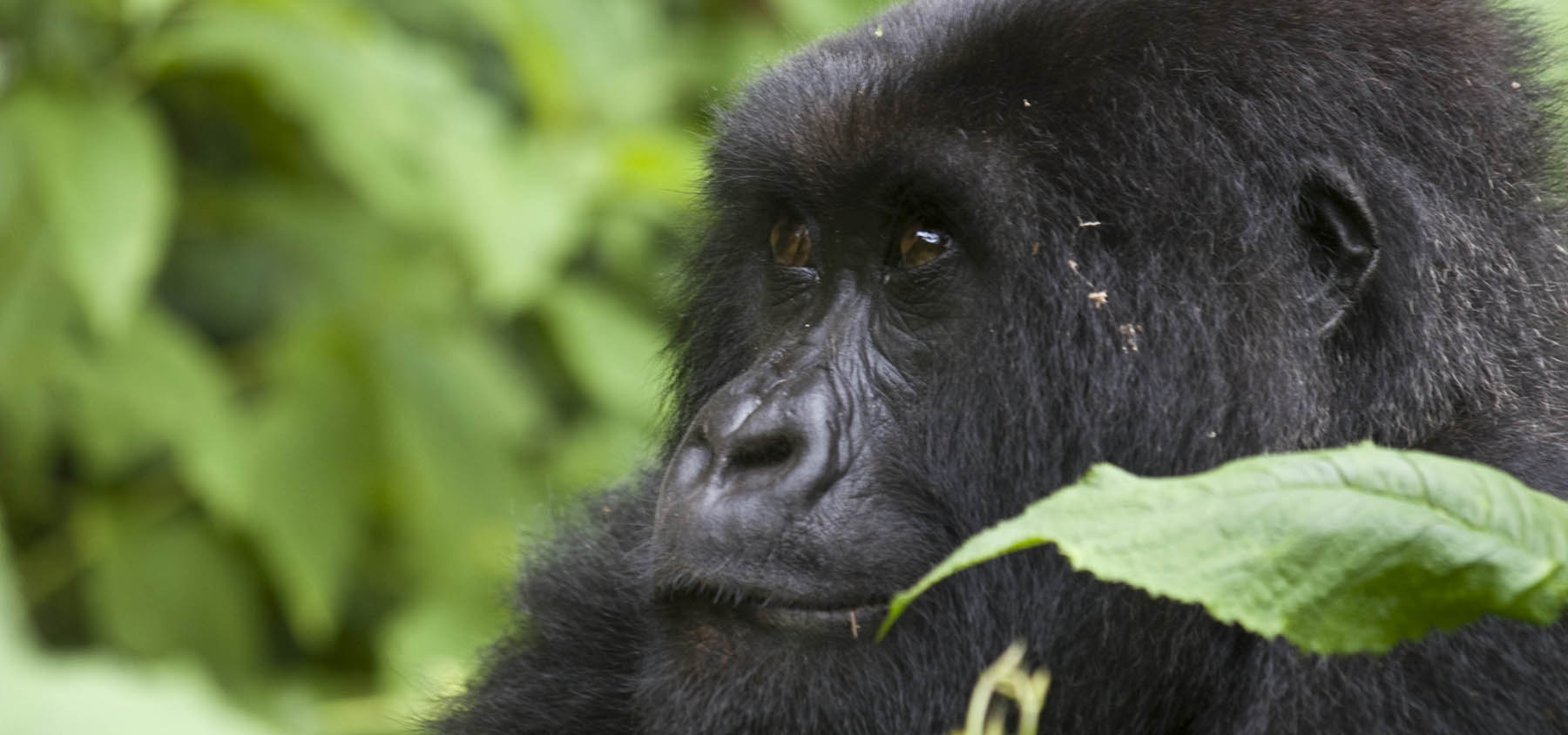 4 Days Gorilla Trek & Wildlife Safari
