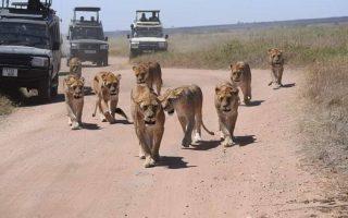 Tanzania Northern tourist circuit