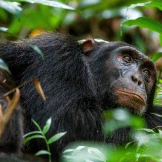 9 Days Uganda Tanzania Safari