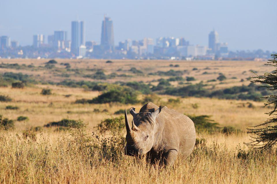 Top 5 Safari Destinations in Kenya