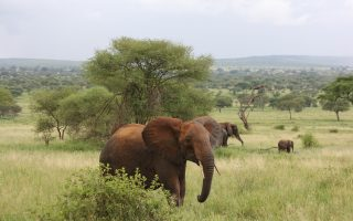 4 Days Best of Tarangire, Ngorongoro & Serengeti
