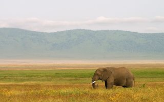 9 Days Tanzania Classic Safari
