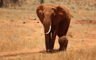 3 Days Amboseli & Tsavo Tour