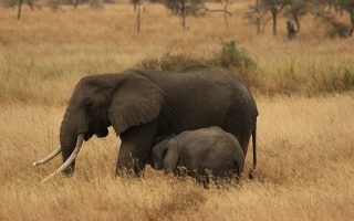 9 Days Tanzania and Kenya Wildlife Safari