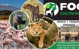focus East Aafrica Tours