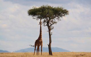 Budget Kenya Holidays, Affordable Vacations - Focus East
