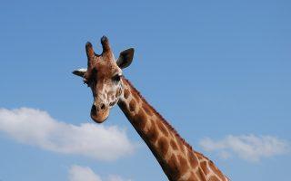 8 Days Tanzania Kenya Safari