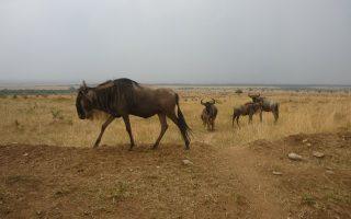 7 Days Best of Kenya & Tanzania