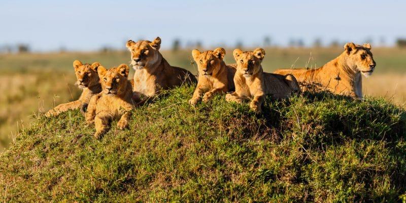9 Days Tanzania Safari - Tarangire, Serengeti, Ngorongoro & Lake Manyara