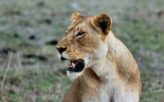 6 Days Masai Mara & Serengeti