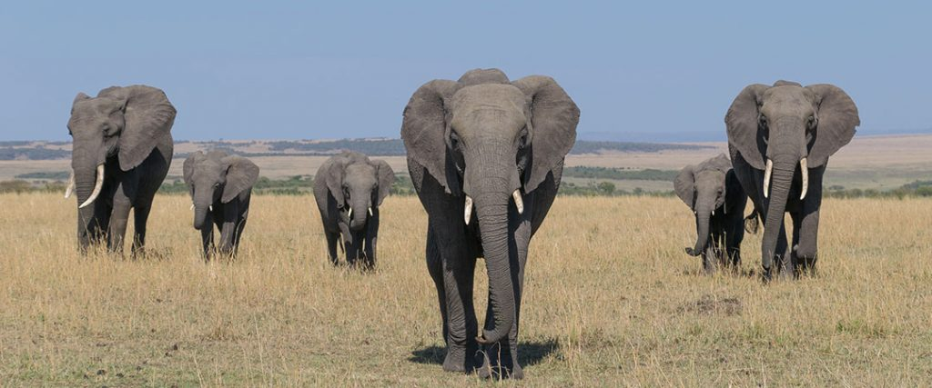 10 days wildebeest and gorilla safari