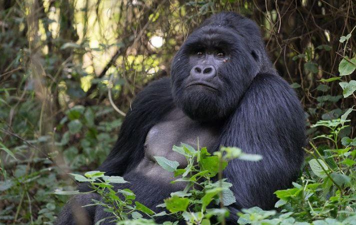 6 days wildlife and gorilla trip Uganda