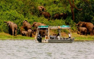 3 Days Queen Elizabeth Wildlife Safari