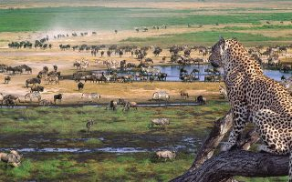 1 Day Tanzania Safari