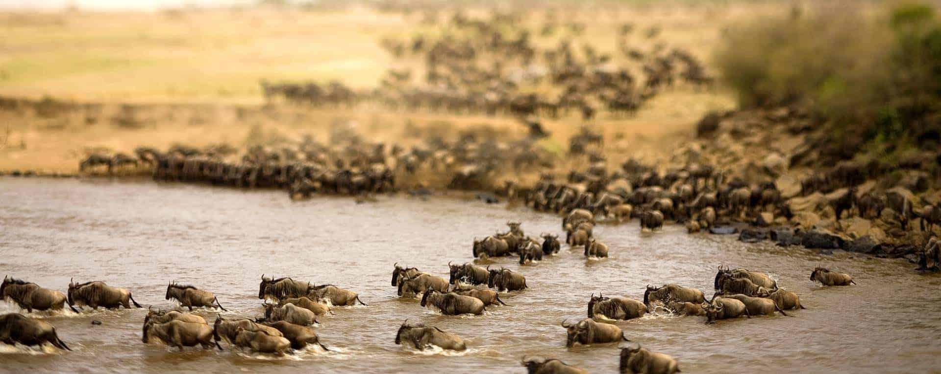 7 days Serengeti and Zanzibar safari