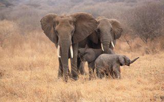 Tailor Made Trips to Tanzania