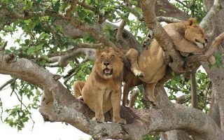 4 Days Queen Elizabeth National Park Safari