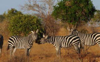 1 Day Safari in Tsavo East National Park