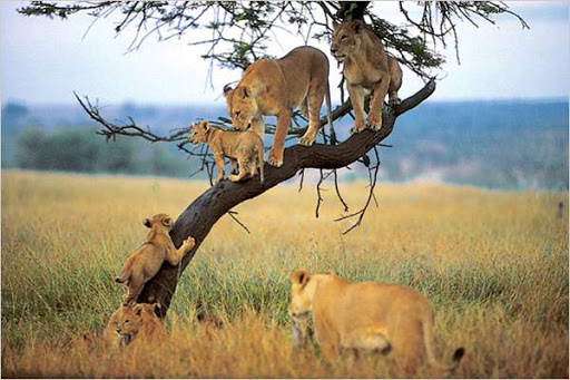 5 days Serengeti wildlife and Maasai cultural safari