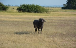 10 Days Best of Kenya Safari