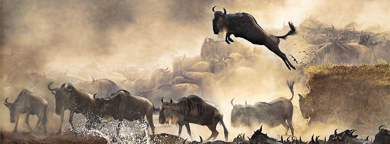 Tanzania wildebeest safari