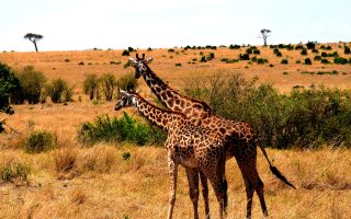 8 Days Kenya Wildlife Safari Tour